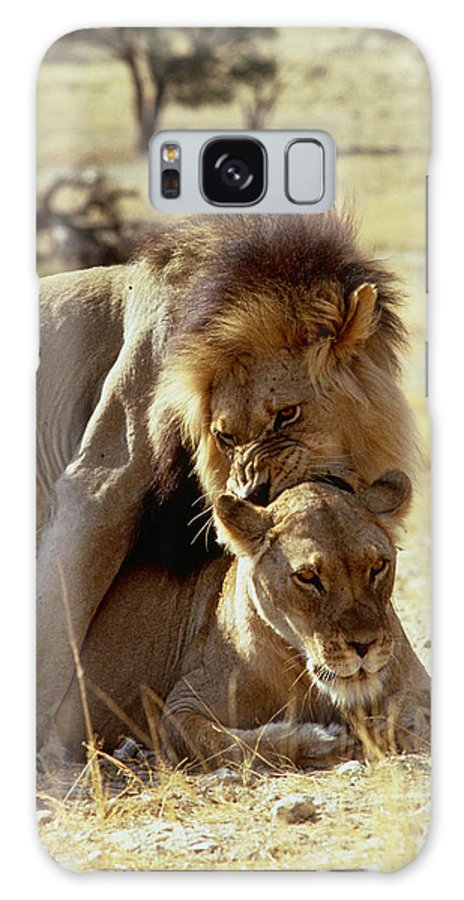 Wildlife Galaxy S8 Case featuring the photograph Lions Mating by Peter Chadwick