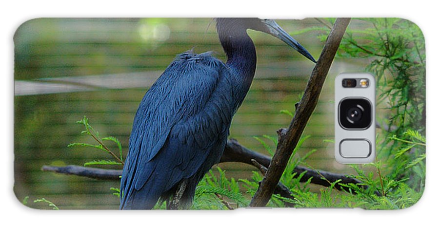 Bird Galaxy S8 Case featuring the photograph Little Blue Heron Portrait by Roy Williams