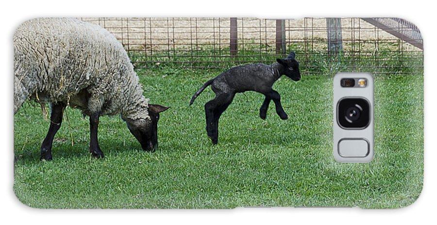 Usa Galaxy S8 Case featuring the photograph Little Lamb Playing by LeeAnn McLaneGoetz McLaneGoetzStudioLLCcom