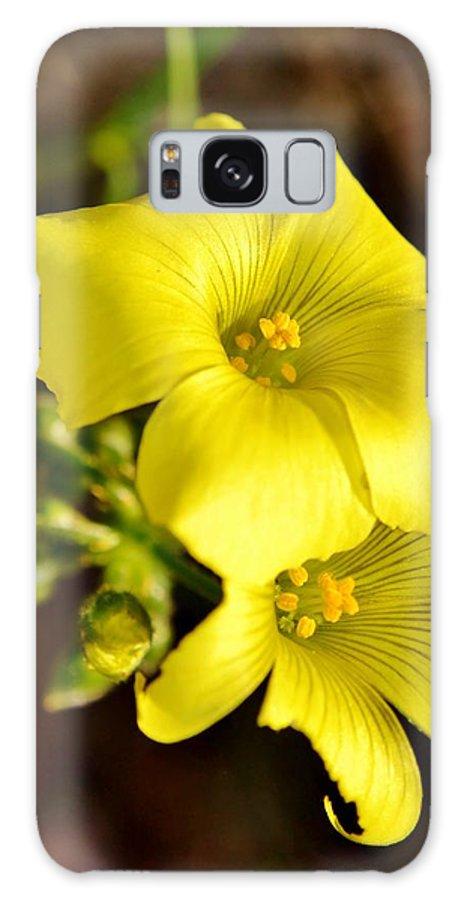 Close Up; Little; Yellow; Flower; Sunlight; Background; Plant; Floral; Petals; Green; Garden; Decorative; Galaxy S8 Case featuring the photograph Little Yellow Flower by Werner Lehmann