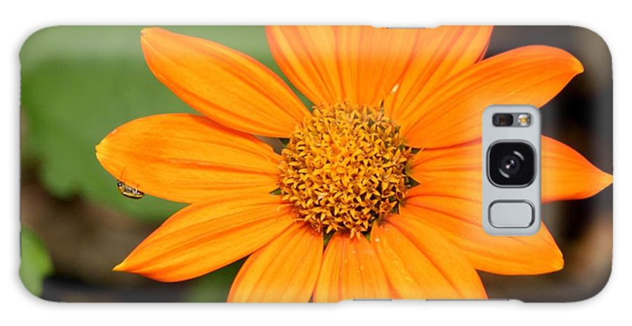 Floral Galaxy S8 Case featuring the photograph Living Life On The Edge by Living Color Photography Lorraine Lynch