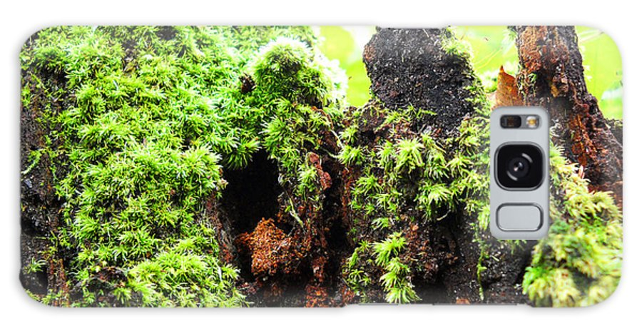 Log Photo Galaxy S8 Case featuring the photograph Log Moutain by Duwayne Washington