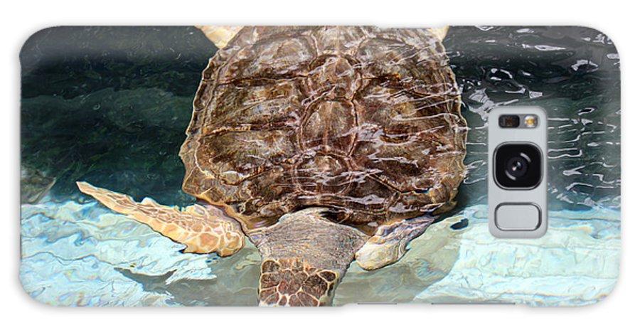 Turtle Galaxy S8 Case featuring the photograph Loggerhead Sea Turtle by Elizabeth Hart