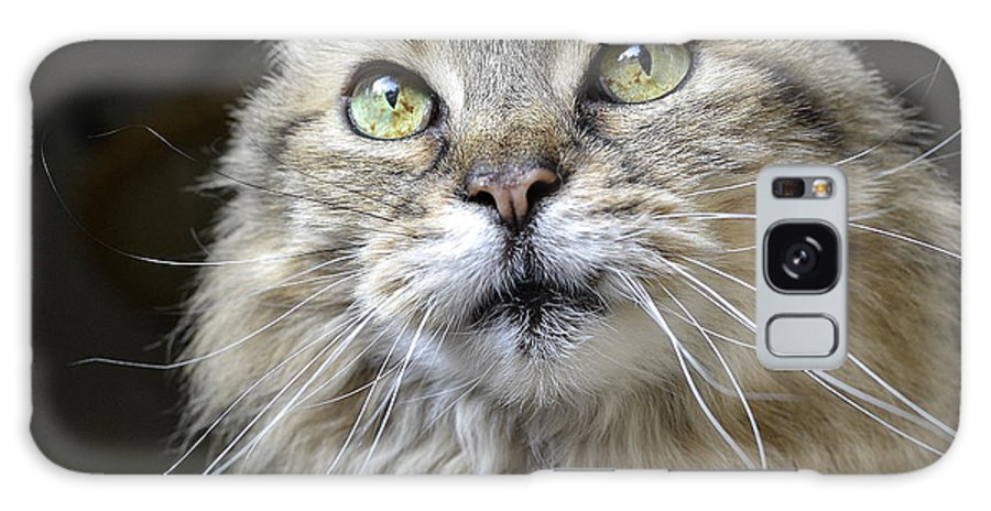 Maine Coon Galaxy S8 Case featuring the photograph Lolas Whiskers by Fraida Gutovich