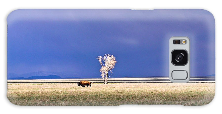 Lone Galaxy S8 Case featuring the photograph Lone Buffalo 4 by Douglas Barnett
