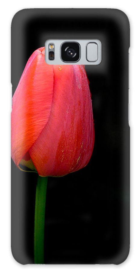 Flower Galaxy S8 Case featuring the photograph Lonely Tulip by Jean Noren