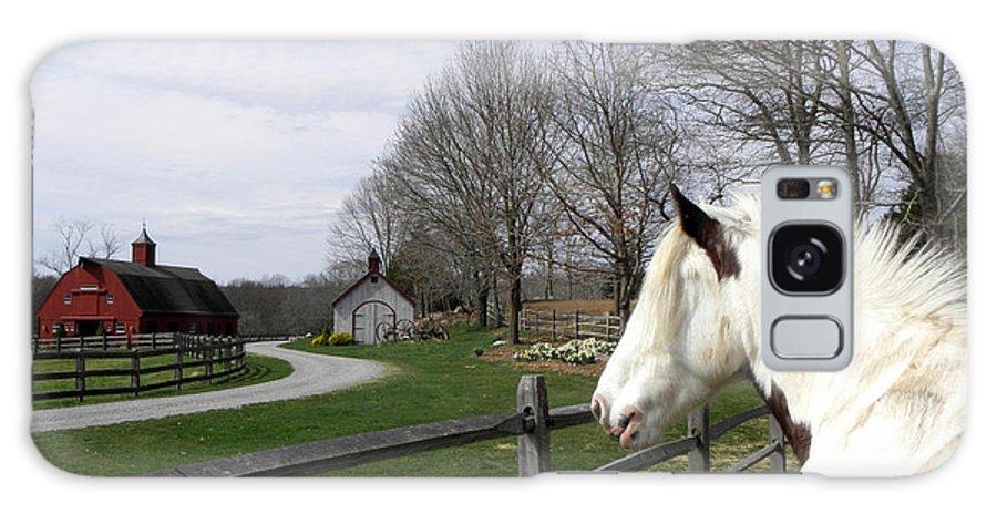 Gypsy Vanner Horse Galaxy S8 Case featuring the photograph Love My Home by Kim Galluzzo Wozniak