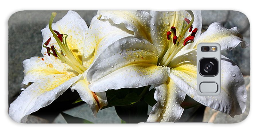 Lovely Sunlit Lily Galaxy S8 Case featuring the photograph Lovely Sunlit Lily by Patrick Witz