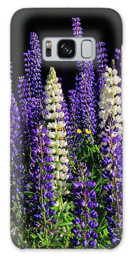 Lupine Galaxy S8 Case featuring the photograph Lupine Flowers by John Burk