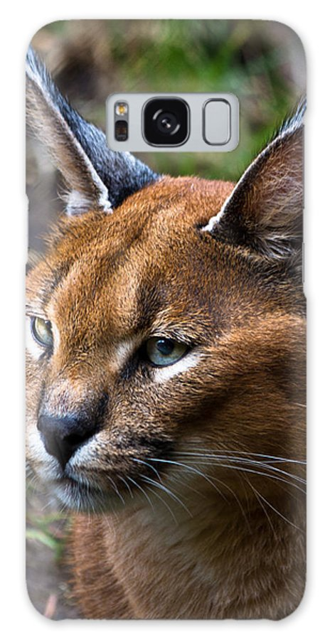 Preditors Galaxy S8 Case featuring the photograph Lynx by James Begley