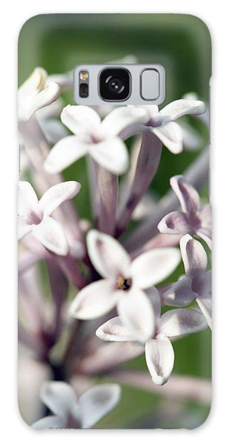 Biology Galaxy S8 Case featuring the photograph Madagascar Jasmine, Stephanotis Floribund by Carlos Dominguez