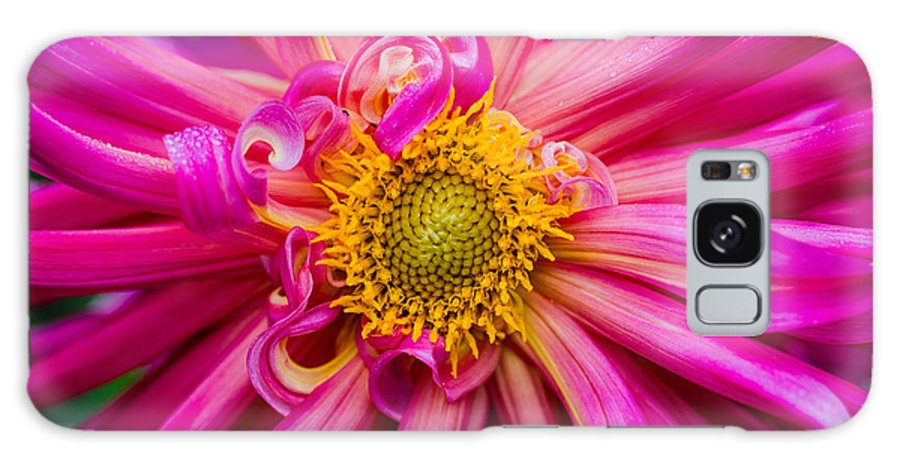 Flower Galaxy S8 Case featuring the photograph Magenta Petals by Greg Nyquist