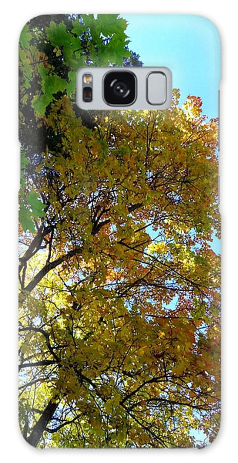 Magnificent Maples Galaxy S8 Case featuring the photograph Magnificent Maples by Will Borden
