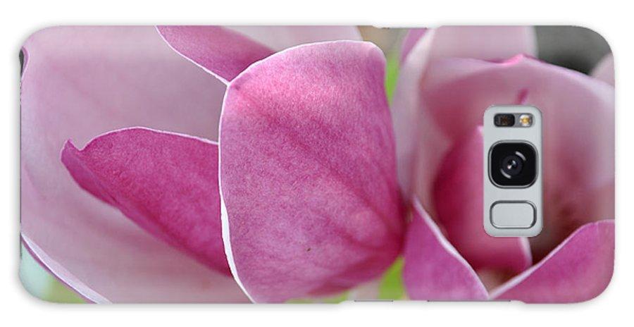 Teresa Blanton Galaxy S8 Case featuring the photograph Magnolia Bloom by Teresa Blanton