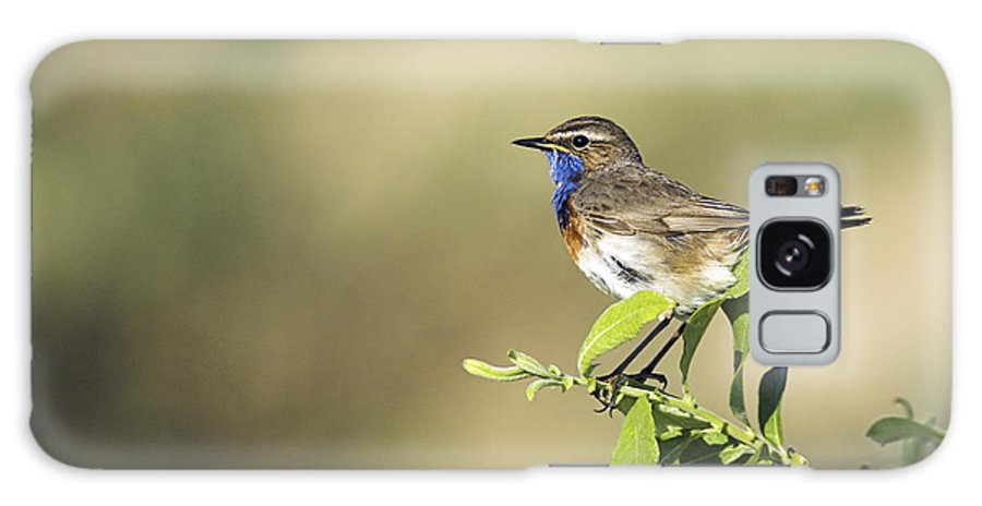 Luscinia Svecica Galaxy S8 Case featuring the photograph Male Bluethroat by Duncan Shaw