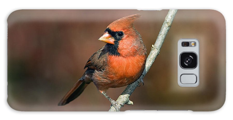 Male Galaxy S8 Case featuring the photograph Male Northern Cardinal - D007813 by Daniel Dempster