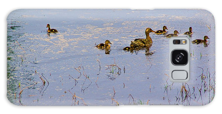 Duck Galaxy S8 Case featuring the photograph Mama Duck And The Kiddies by Mick Anderson