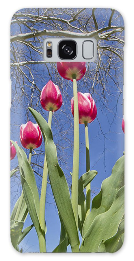Tulips Galaxy S8 Case featuring the photograph Meeting The Tree by Betsy Knapp