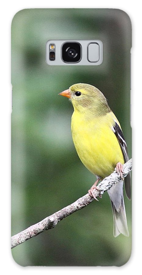 Goldfinch Galaxy S8 Case featuring the photograph Mellow Lady by Travis Truelove