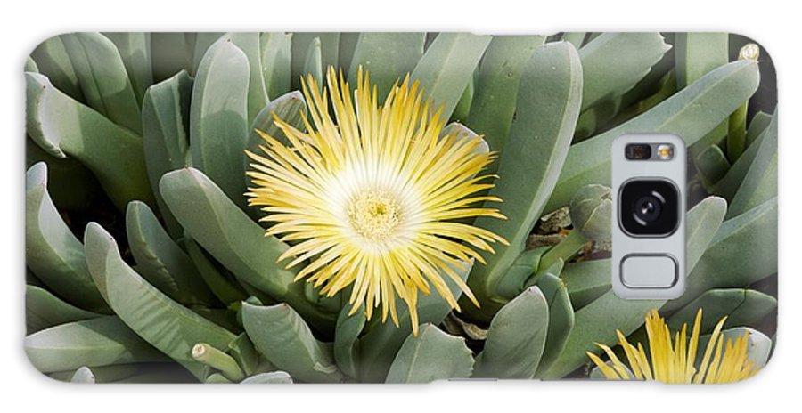 Aizoaceae Galaxy S8 Case featuring the photograph Mesemb (conicosia Elongata) by Bob Gibbons