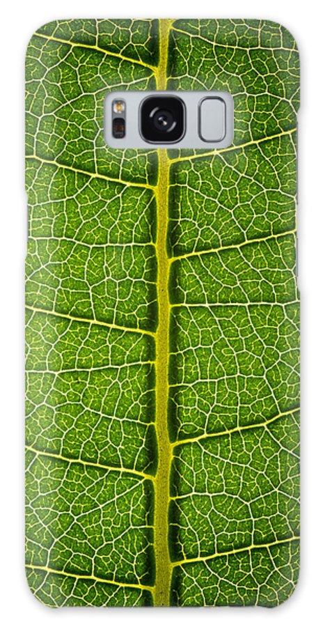 Gadomski Galaxy S8 Case featuring the photograph Milkweed Leaf by Steve Gadomski