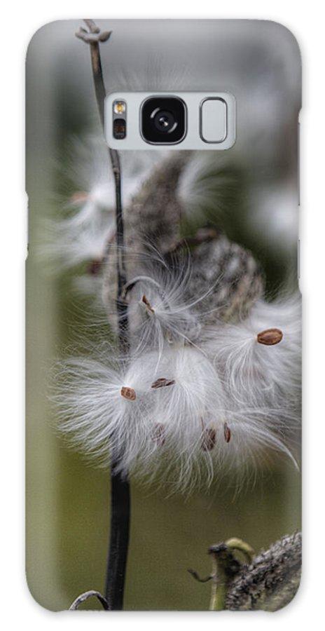 Milkweed Galaxy S8 Case featuring the photograph Milkweed by Steve Gravano