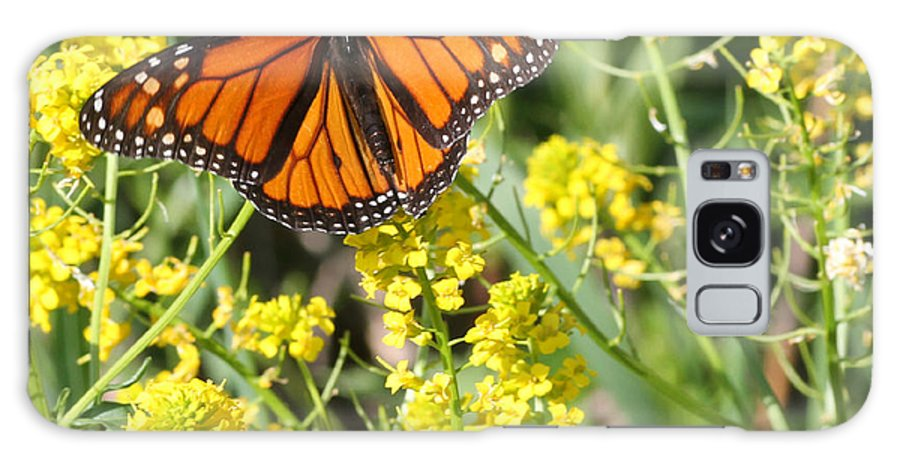 Galaxy S8 Case featuring the photograph Monarch Butterfly by Mark J Seefeldt