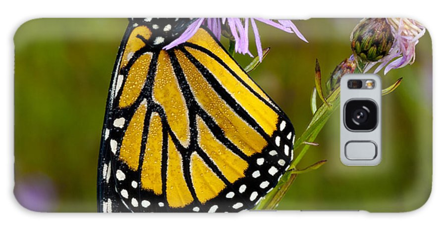 Monarch Galaxy S8 Case featuring the photograph Monarch by Cindy Lindow