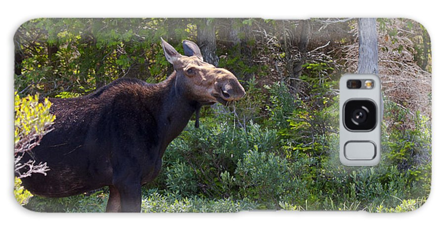 Moose Galaxy S8 Case featuring the photograph Moose Baxter State Park Maine 3 by Glenn Gordon