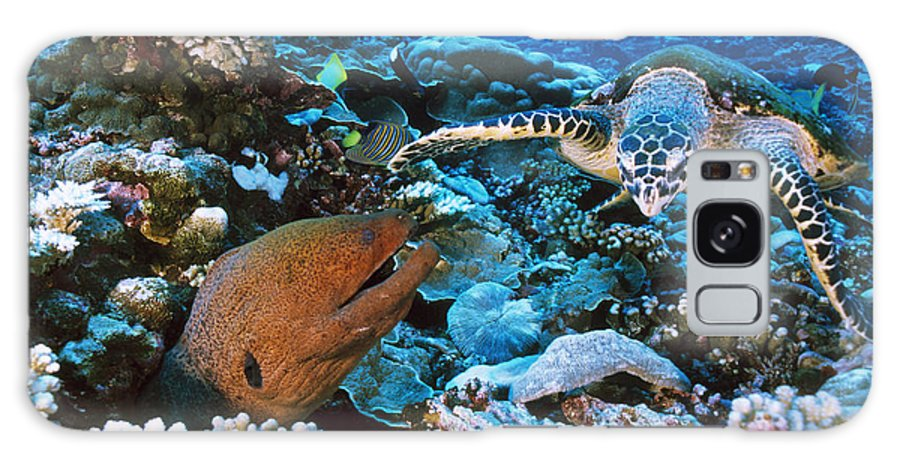 Moray Eel Galaxy S8 Case featuring the photograph Moray Eel On A Reef by Alexis Rosenfeld