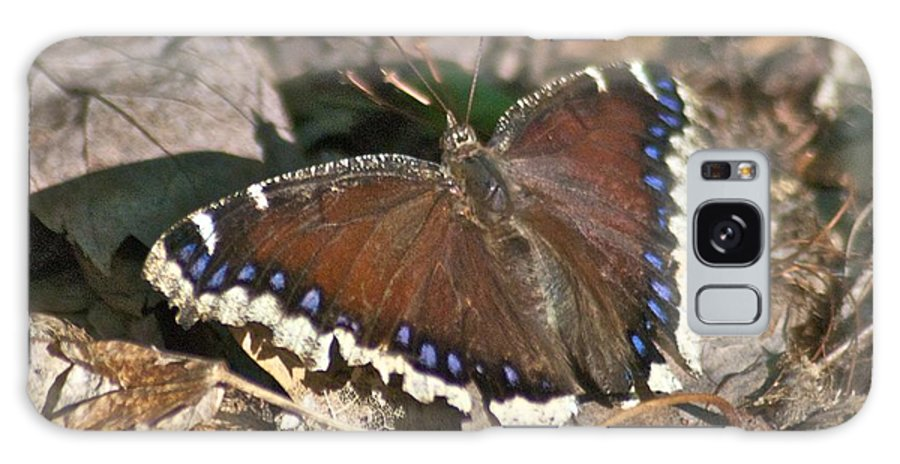Butterflies Galaxy S8 Case featuring the photograph Morning Cloak 7580 by Michael Peychich