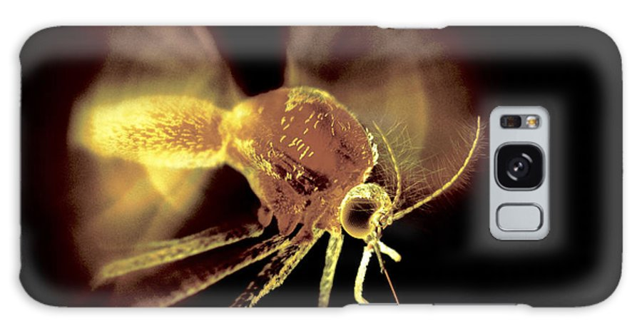 Animal Galaxy S8 Case featuring the photograph Mosquito by Ian Cuming