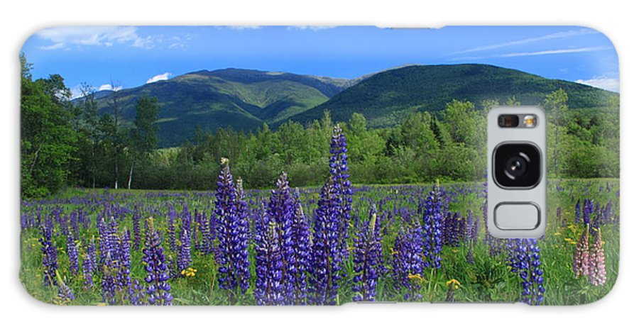 Mount Adams Galaxy S8 Case featuring the photograph Mount Adams And Lupine Field by John Burk