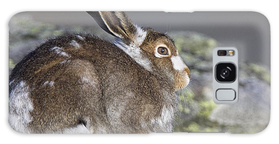 Mountain Hare Galaxy S8 Case featuring the photograph Mountain Hare by Duncan Shaw