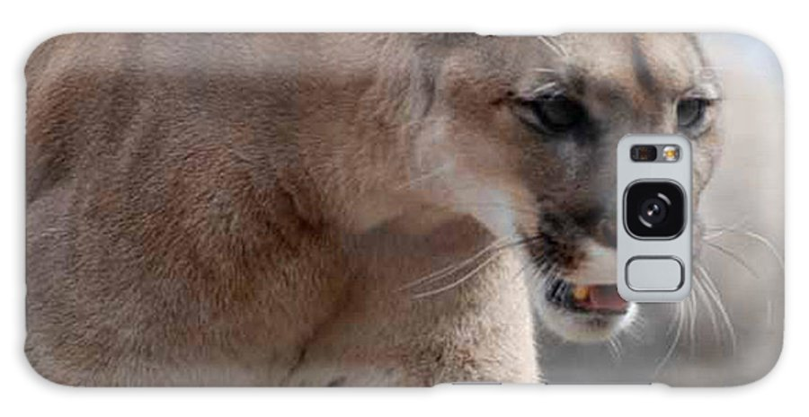 Mountain Galaxy S8 Case featuring the photograph Mountain Lion by Paul Ward