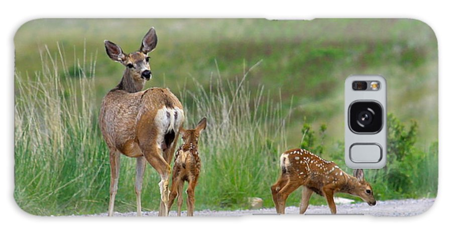 Deer Galaxy S8 Case featuring the photograph Mule Deer Doe And Twin Fawns by Karon Melillo DeVega