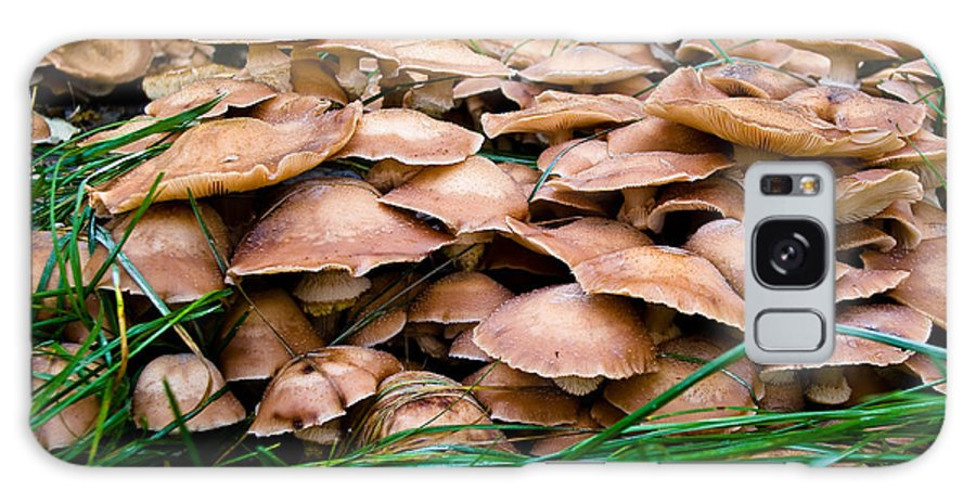 Mushroom Galaxy S8 Case featuring the photograph Mushrooms Galore by Terry Elniski