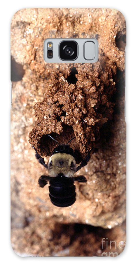 Mustached Mud Bee Galaxy S8 Case featuring the photograph Mustached Mud Bee by Science Source