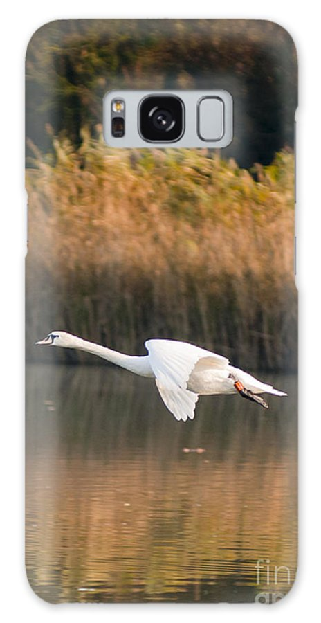 England Galaxy S8 Case featuring the photograph Mute Swan by Andrew Michael