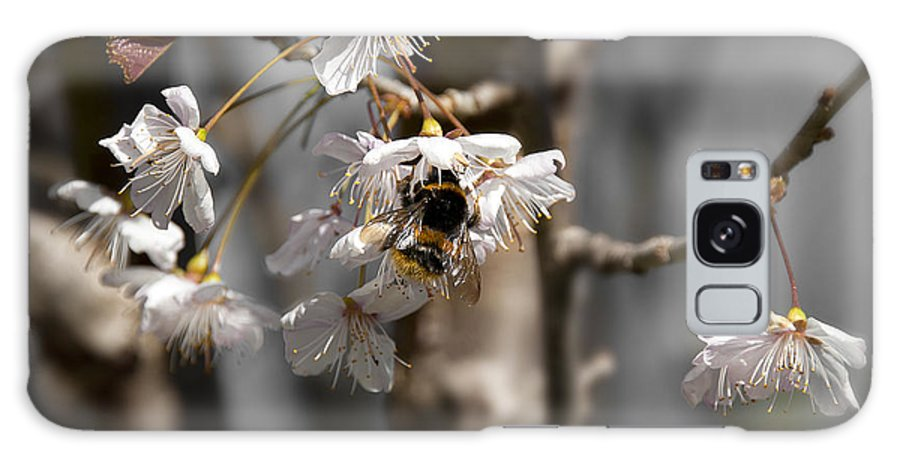 Bee Galaxy S8 Case featuring the photograph Nectar Collector by Svetlana Sewell