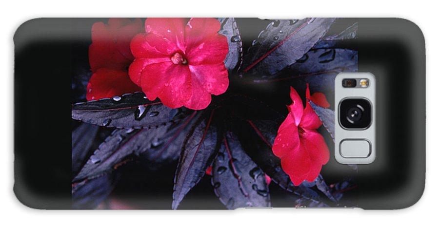 Vivid Galaxy S8 Case featuring the photograph New Guinea Impatiens by Tom Wurl