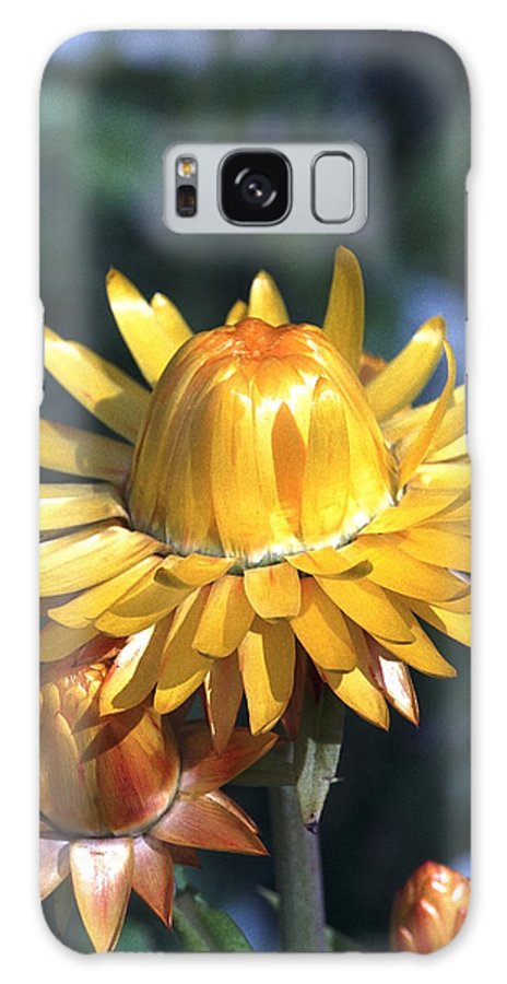 Plants Galaxy S8 Case featuring the photograph Nice Corolla by Patrick Kessler