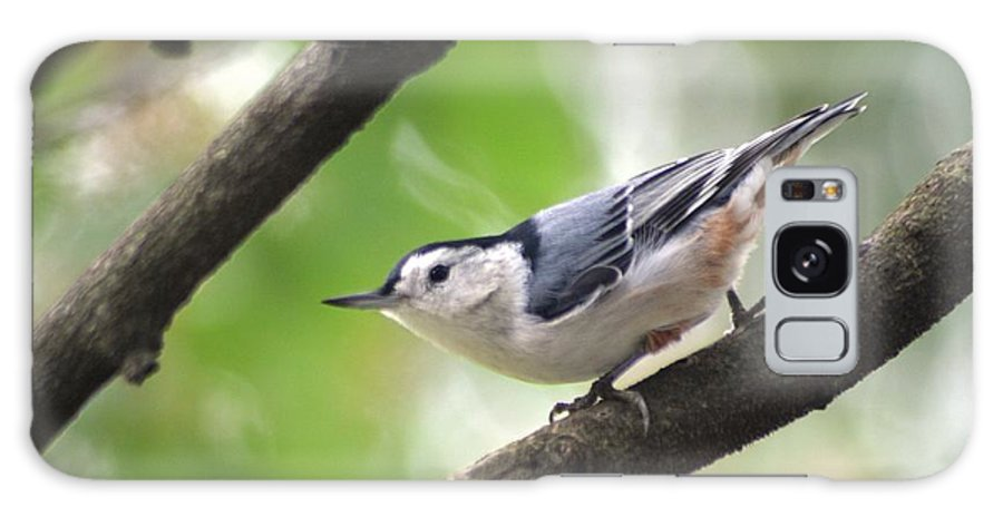 Birds Galaxy S8 Case featuring the photograph Nuthatch by Living Color Photography Lorraine Lynch
