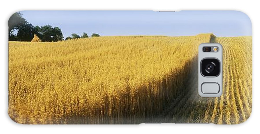 Cereal Plant Galaxy S8 Case featuring the photograph Oat Crops On A Landscape, County Dawn by The Irish Image Collection