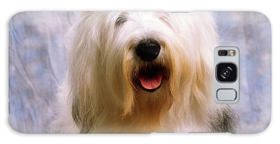 Breed Galaxy S8 Case featuring the photograph Old English Sheepdog by The Irish Image Collection