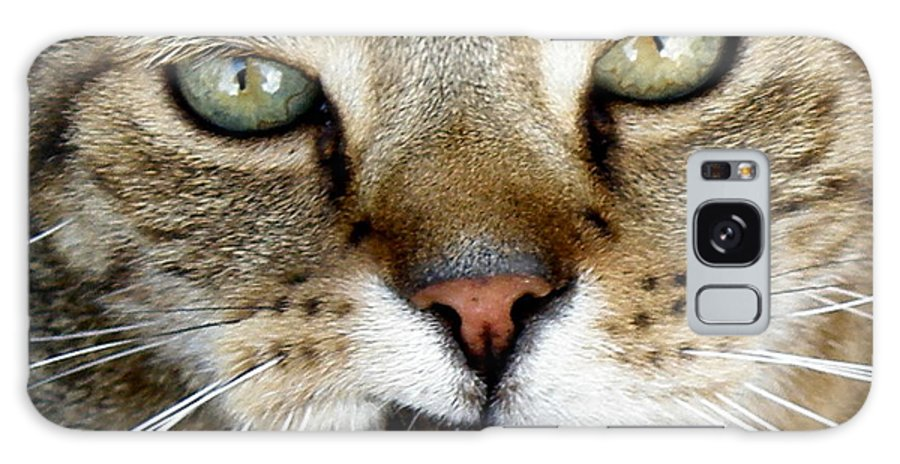 Cat Galaxy S8 Case featuring the photograph Oliver The Cat by Lainie Wrightson