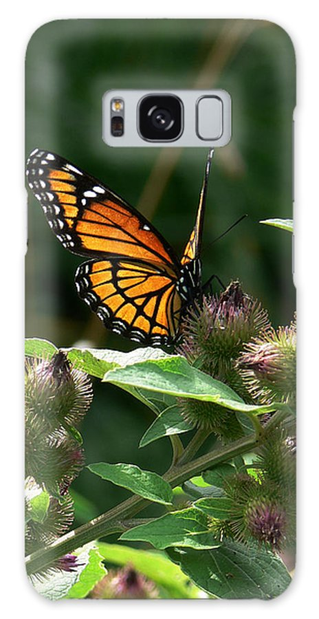 Viceroy Butterfly Galaxy S8 Case featuring the photograph Optimistic Vision by Natalie LaRocque
