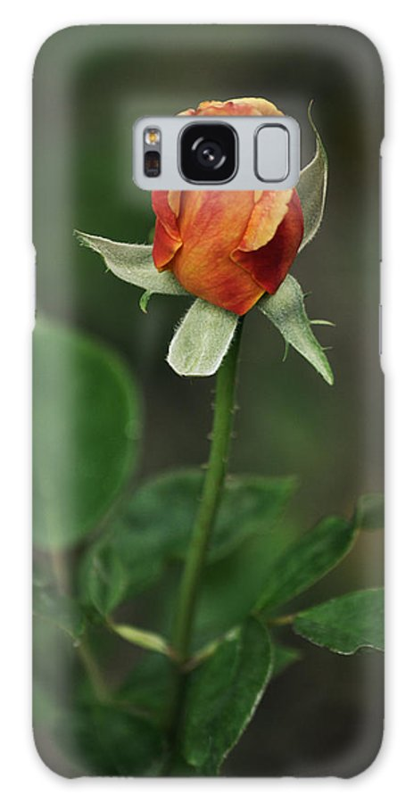 Orange Rose Galaxy S8 Case featuring the photograph Orange And Yellow Rose by Mary Machare