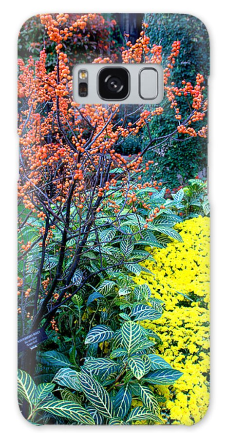 Berries Galaxy S8 Case featuring the photograph Orange Berries by Mark Holden