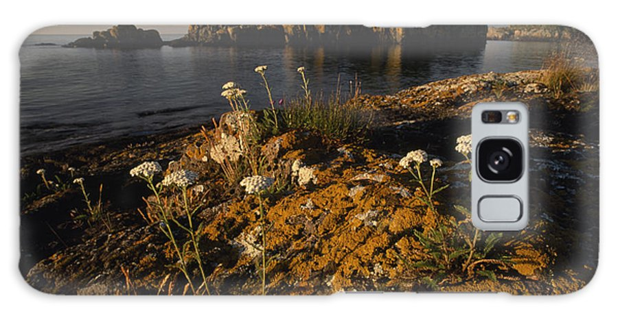 Outdoors Galaxy S8 Case featuring the photograph Orange Lichen-covered Rocks At Isle by Phil Schermeister
